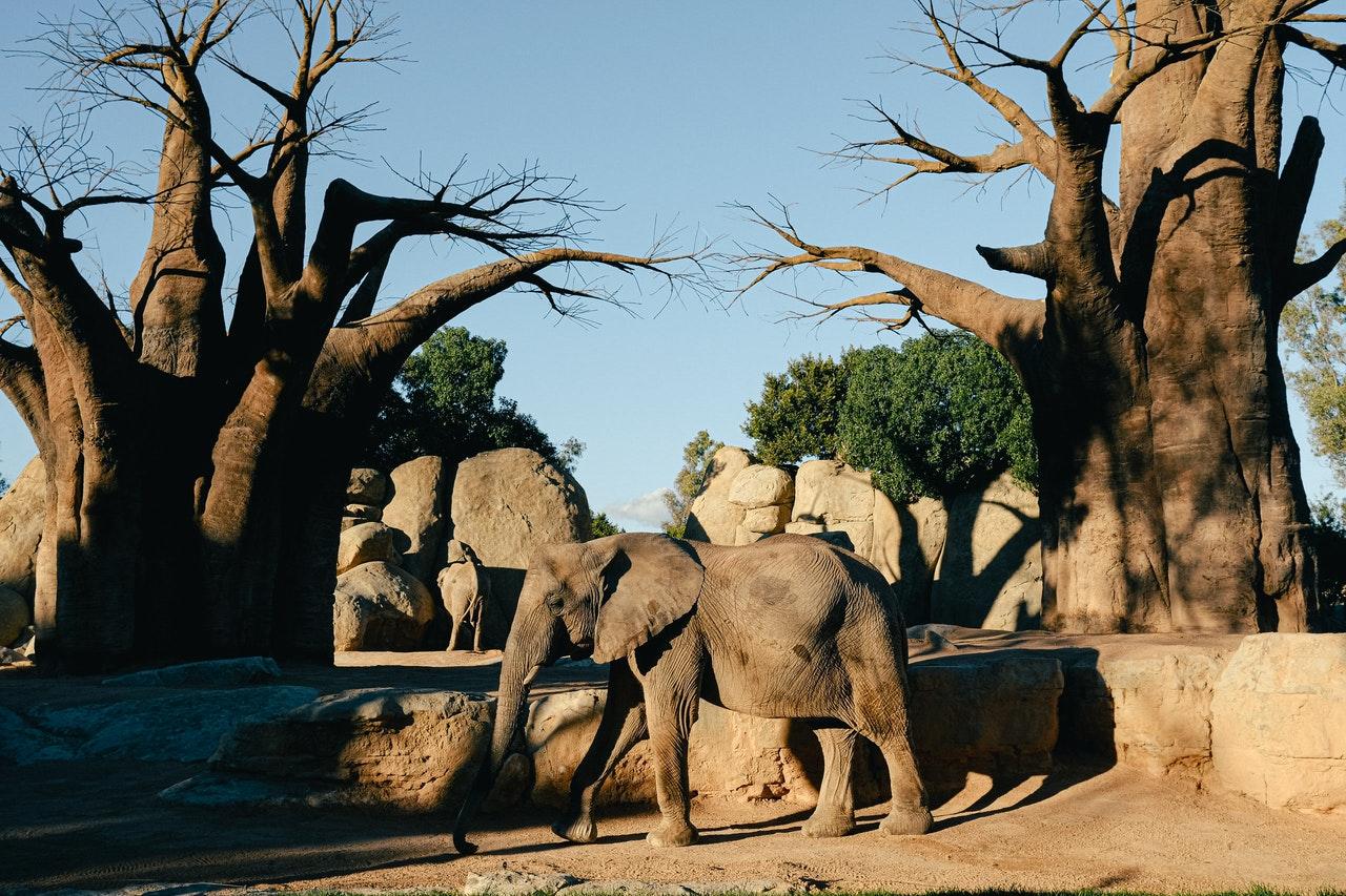 Read more about the article Découvrez 7 arbres remarquables aux quatre coins du monde